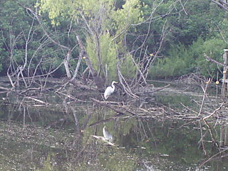Egret reflections41