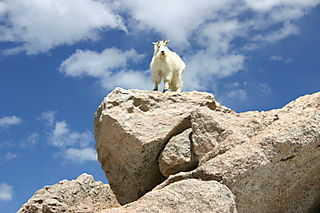 OkGOAT download June 11 023