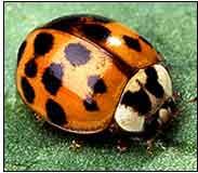 One ladybug