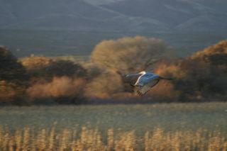 AA 2 crane landing 1480