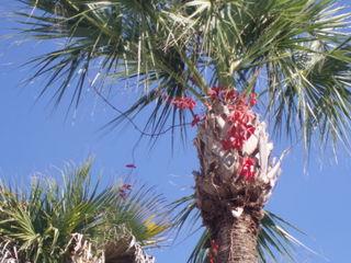 Christmas palm31