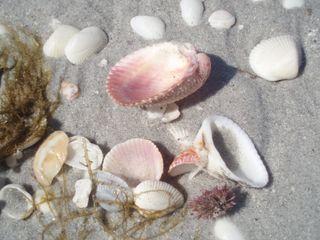 Shells 67