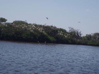 Bird island 06