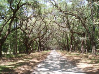 Wormsloe tree lined 70