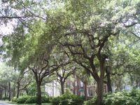 Tree lined street 37
