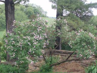 Flower bush taliesen18