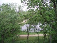 Tree pond 23