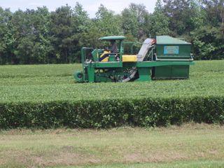 Tea harvester 06
