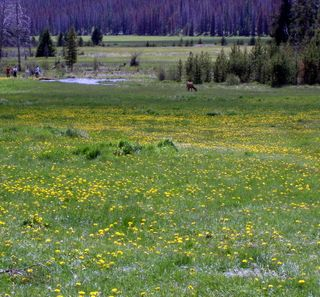 Elk meadow p15