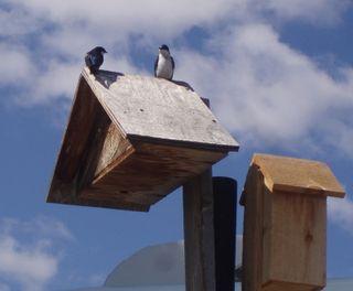 Birdhouses009