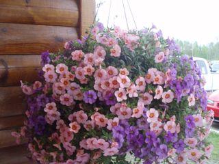 Flowers bemedji62