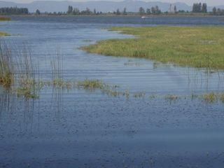 Wetlands 27