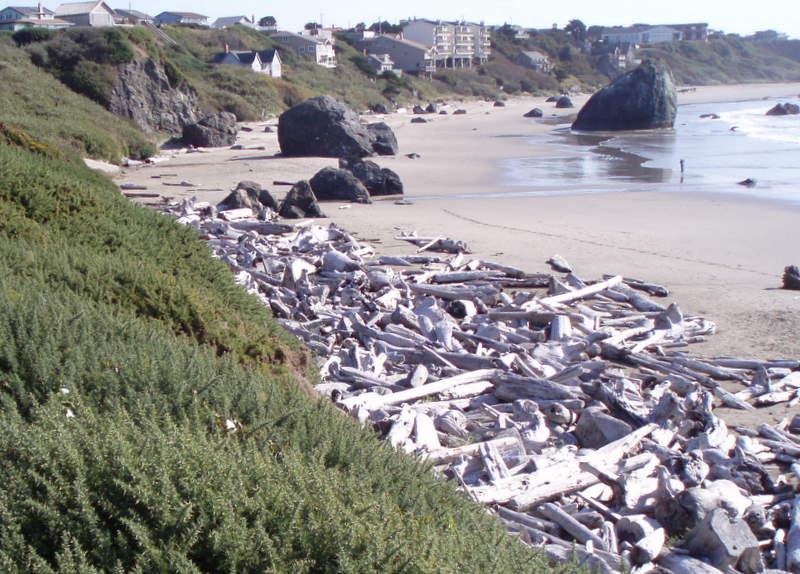 Driftwood beach 79