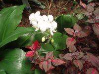 Sc magnolia conserv. 03