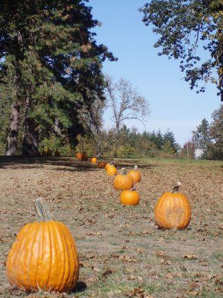 Pumpkin trail 31