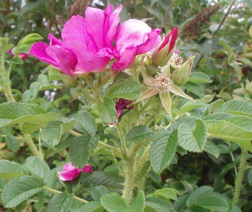 Summer flower 02