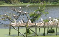 Bird Island 090