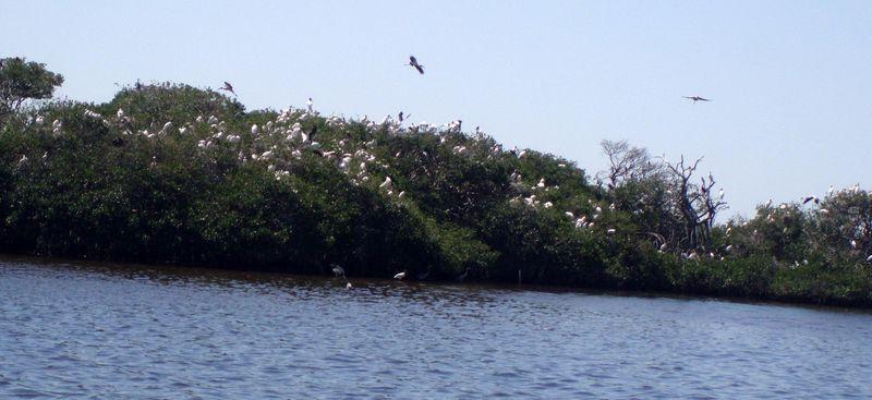 BIRD ISLAND 06_crop