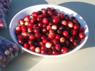 Cranberry bowl 09