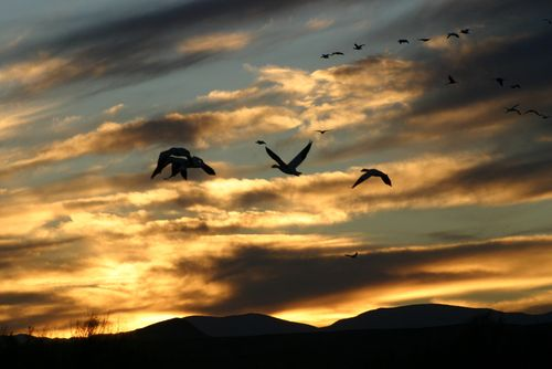 H sunset and birds 1450