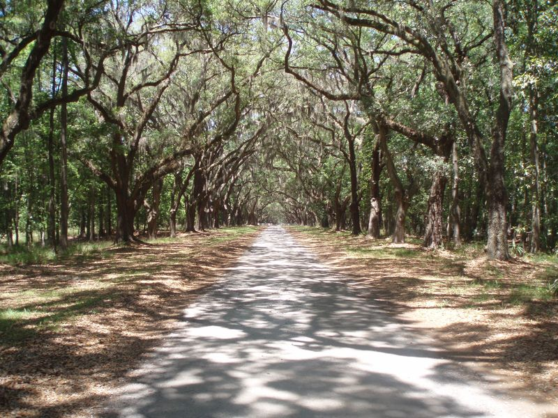 Wormsloe tree lined 069