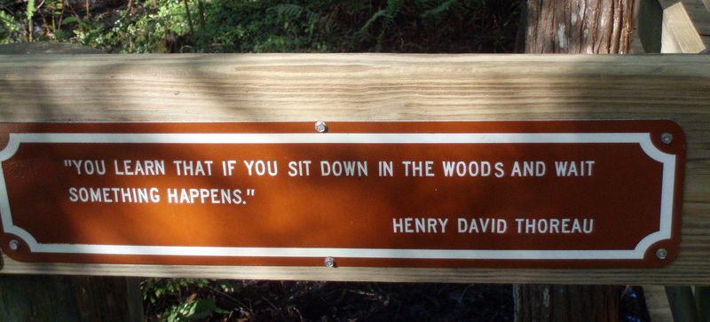 Thoreau_crop