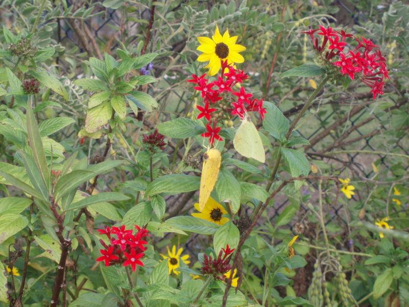 Butterfly garden manatee park 20