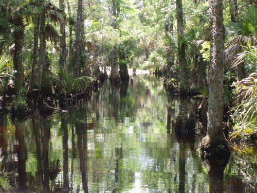Swamp cypress tour 043