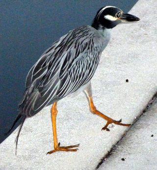 Bird61