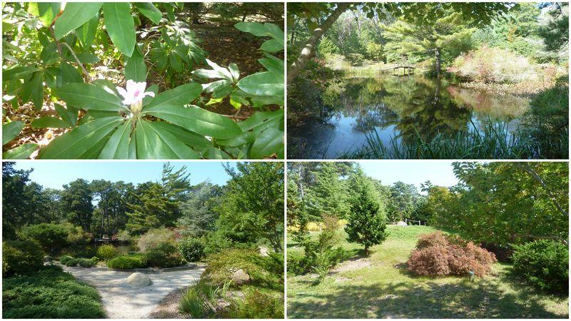Mitoi gardens chappy isl