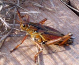 THIS grasshopper02
