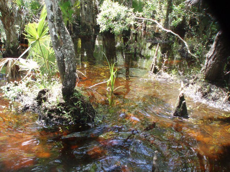 Swamp038