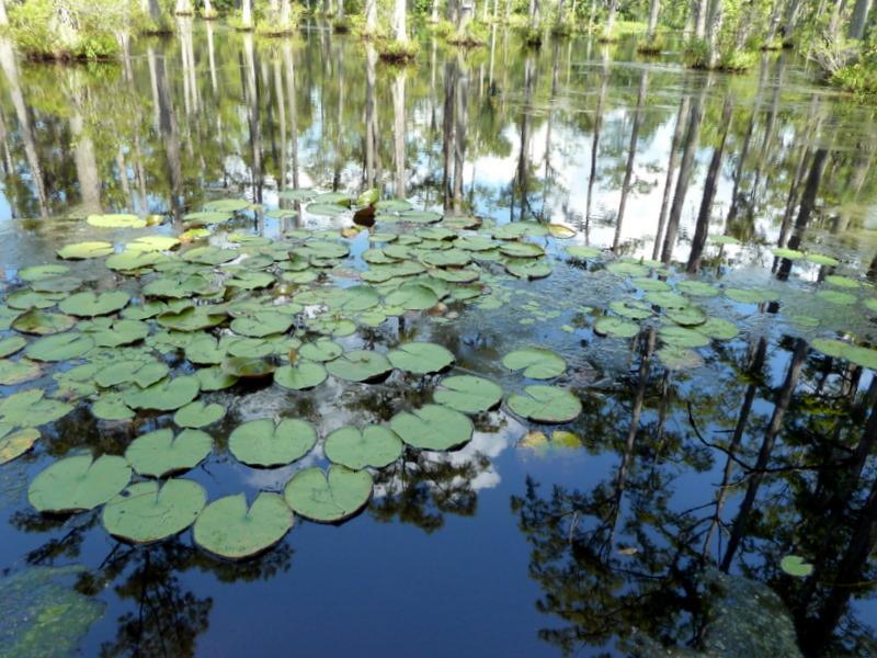 Swamp refl016-1