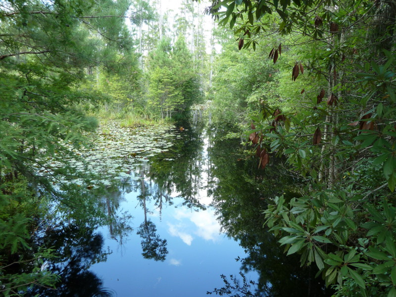 Swamp canal022-1