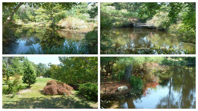 Mitoi gardens chappy isl1