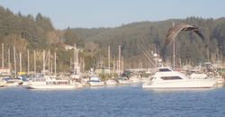 Boat basin and bird 60
