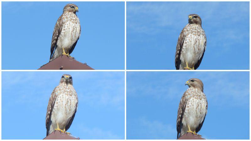 Birds franklin locks park 1 201l