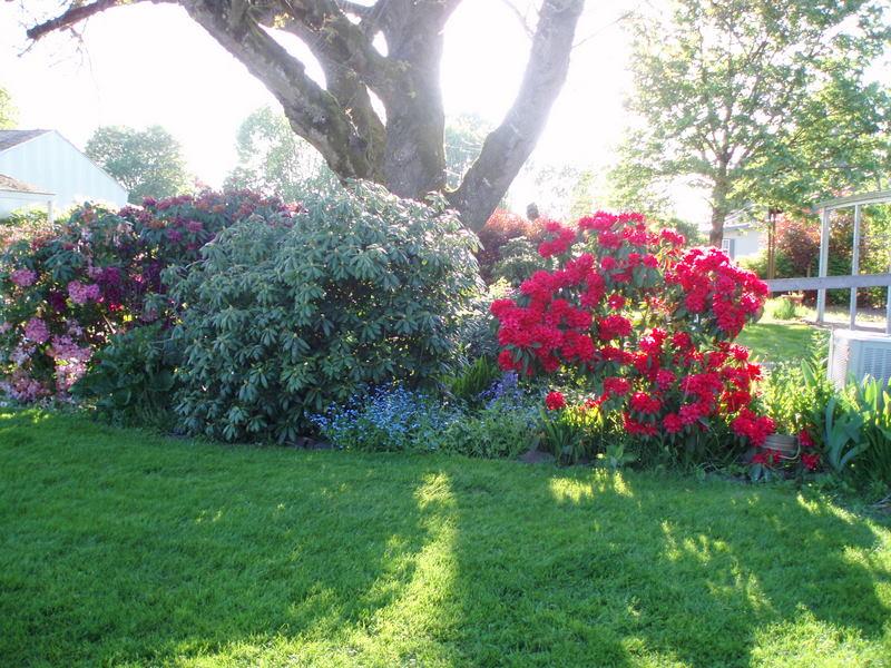 Alvadore gardens