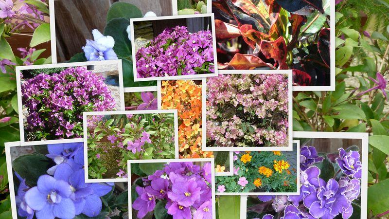 FLOWERSHOP PIC PILE