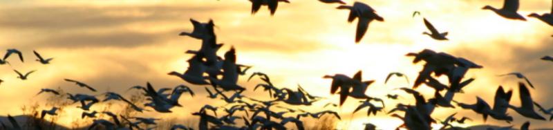 Flyover sundown 1439