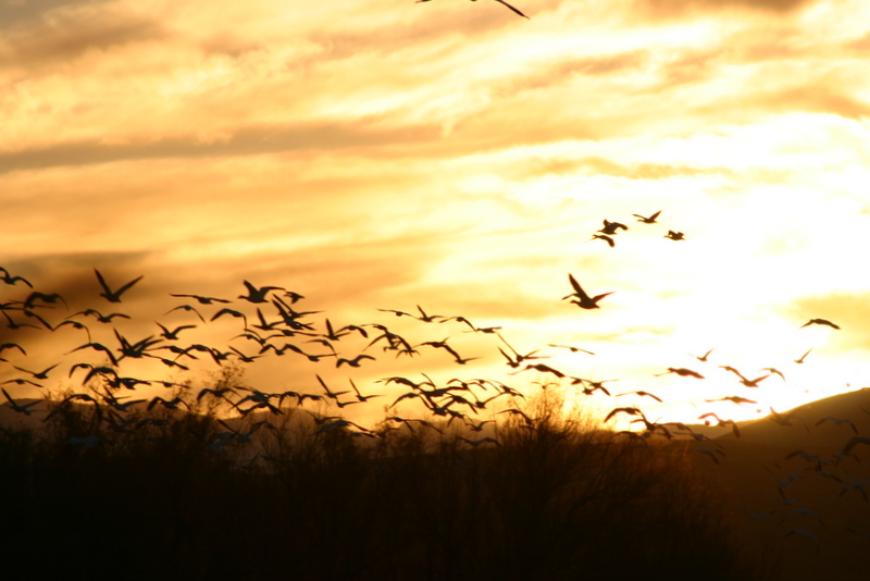 Golden sunset and birds _1427-1