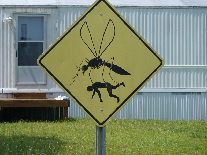 Mosquito sign338