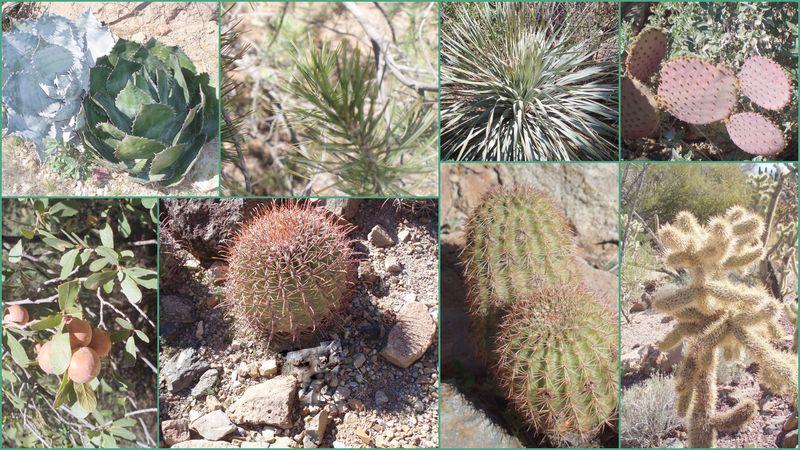 Arizona Cactus Collection1