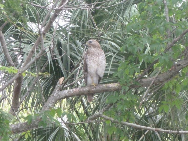 City hawk profile