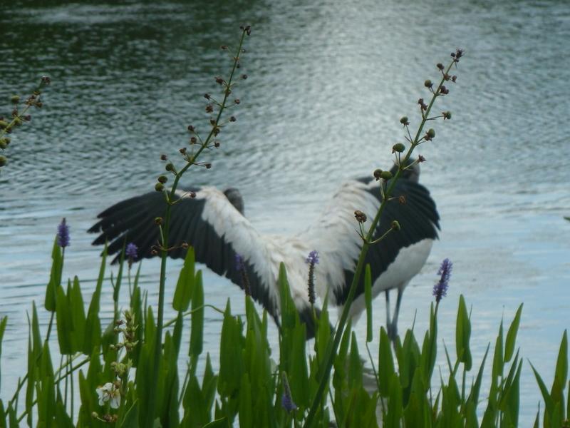 Wings olny