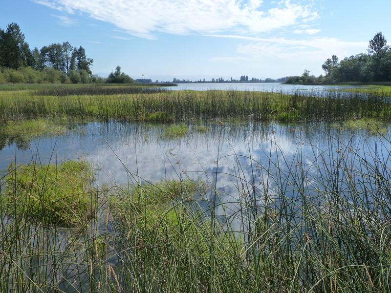 Wetland sky refl