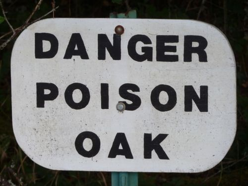 Poison oak sign