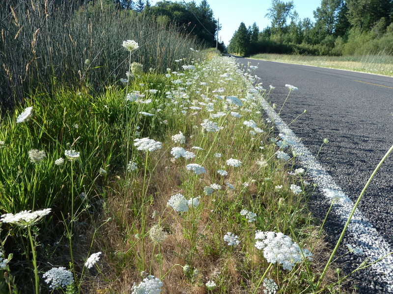 White line of flowers