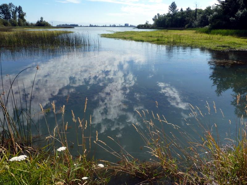 Wetland sky refl 3