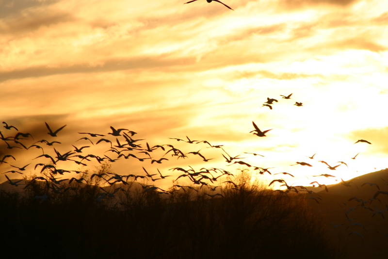 Golden sunset and birds _1427